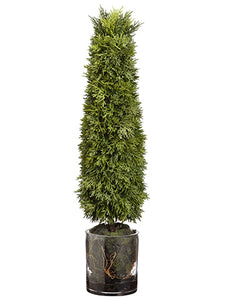 "26""Hx5""Wx5""L Cedar Cone Topiary in Glass Cylinder Vase Green (pack of 1)"