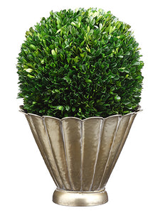 "19""Hx12""Wx12""L Preserved Boxwood Ball in Scalloped Metal Container Green (pack of 1)"