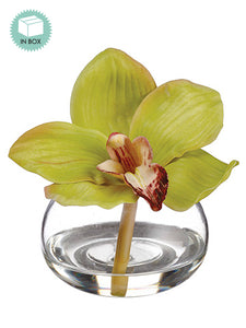"4"" Cymbidium Orchid in Glass Vase in Re-Shippable Box Green (pack of 3)"