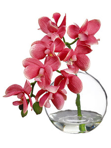 "10"" Phalaenopsis Orchid in Glass Vase Pink (pack of 1)"