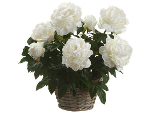 "22"" Peony in Basket in Re-Shippable Box Cream (pack of 2)"