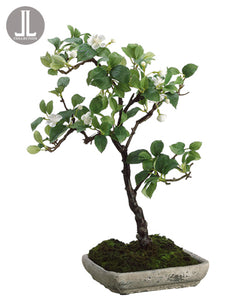 "18.5"" Apple Blossom Mini Tree in Cement Plate in Re-Shippable Box White (pack of 2)"