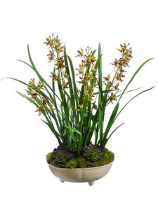 "26"" Mini Cymbidium Orchid Plant w/Moss/Succulent in Ceramic Bowl in Re-Shipper Box (pack of 1)"