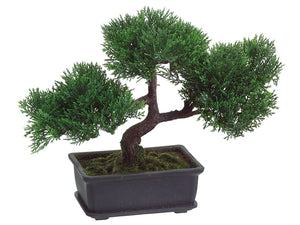 "9"" Cedar Bonsai w/113 Leaves in Rectangular Brown Pot Green (pack of 4)"