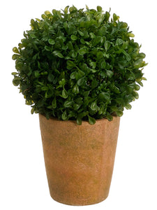 "10"" Boxwood Ball in Terra Cotta Pot Green (pack of 2)"