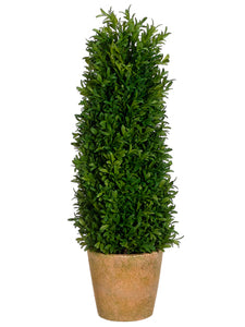 "24"" Tea Leaf Cone Topiary in Terra Cotta Pot in Re-Shippable Box Green (pack of 1)"