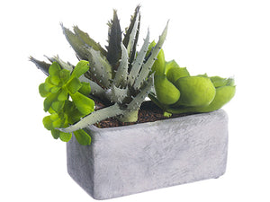 "6"" Agave/Echeveria in Terra Cotta Pot Green (pack of 4)"