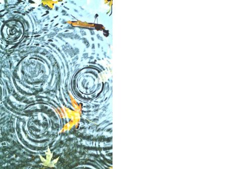 Rippling Pond Blank Greeting Card