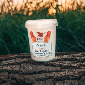 Brown Cow Organic Ginger Organic Yoghurt