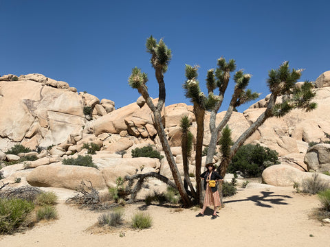 Dear Travels: Joshua Tree