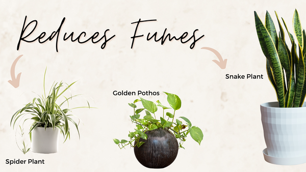 plants for salons