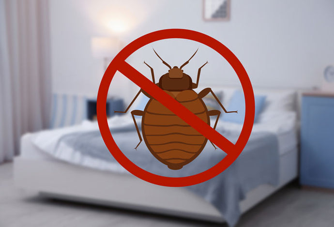 Protecting Your Home from Bed Bugs - The Ultimate Hitchhikers!