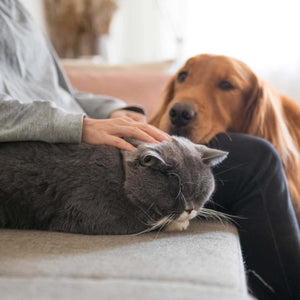 Dog and cat beside owner