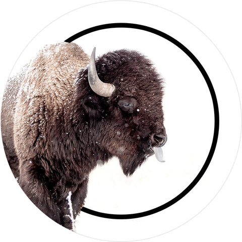 Sassy Buffalo Sticker