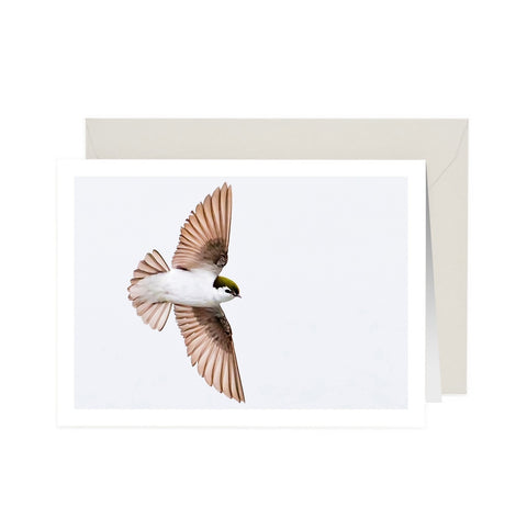 Bird Zen Flight Note Card