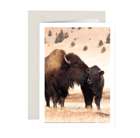 Buffalo Kisses NoteCard