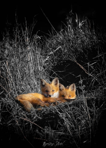 Fox Kit Cuddles