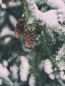 SYLVAN WINTER - Essential Oil Blend - Fir Needle, Scotch Pine,  Mandarin, Tangerine, Juniper Berry,  Petitgrain, Bergamot, Rosemary