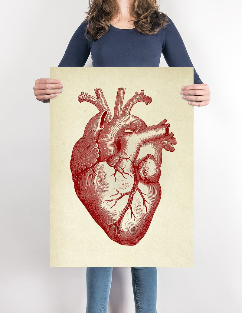 Anatomical Human Heart Vintage Poster Illustration Print On Canvas, Wall Hanging Decor PictureVintage FrogPictures & Prints