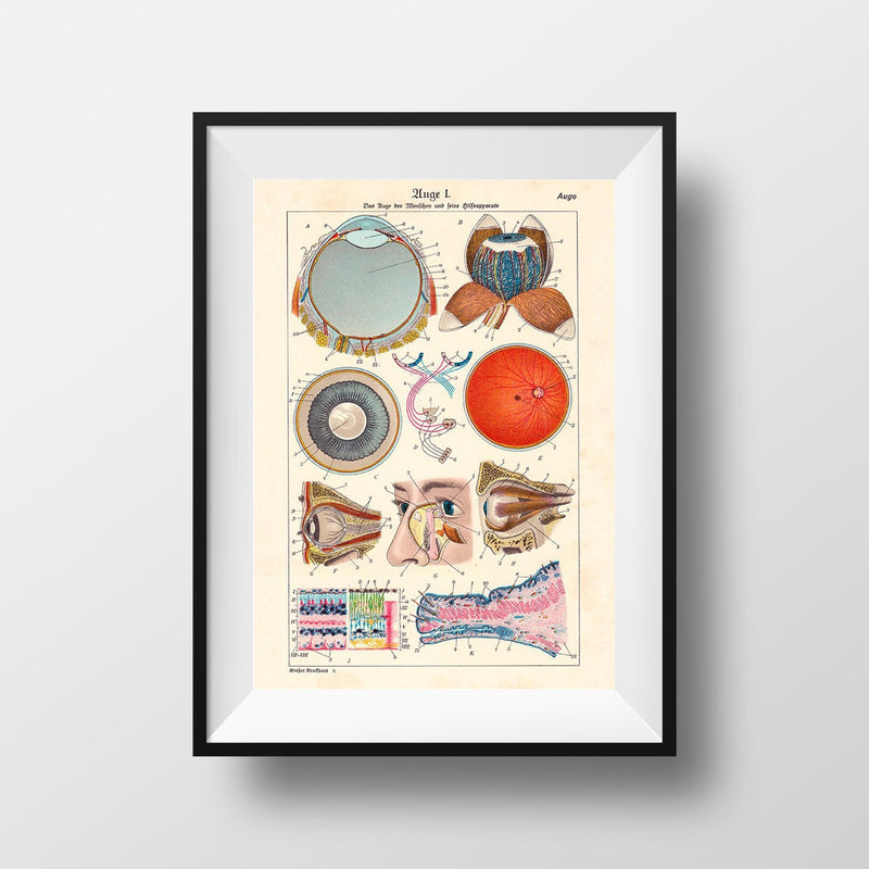 Anatomy of The Human Eye Poster Illustration Print On Canvas, Wall Hanging Decor PictureVintage FrogPictures & Prints