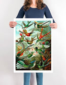 Birds of Paradise Illustration by Ernst Haeckel Print On Canvas, Wall Hanging Decor PictureVintage FrogPictures & Prints
