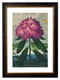 Blossomed Flower - Referencing Antique 1900s Artwork Print. Framed Wall Art PictureVintage Frog T/APictures & Prints