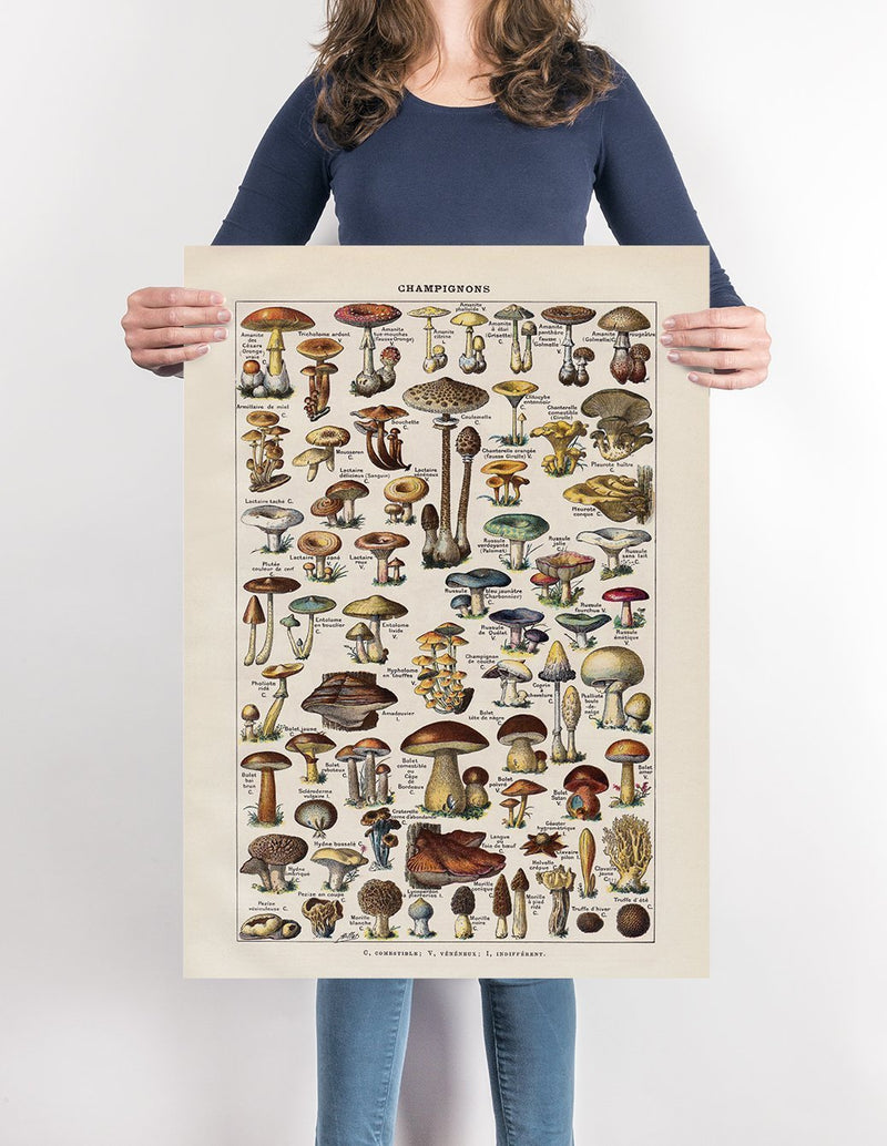 Champignon Mushroom Fungi Chart by Adolphe Millot Illustration Print On Canvas, Wall Hanging Decor PictureVintage FrogPictures & Prints