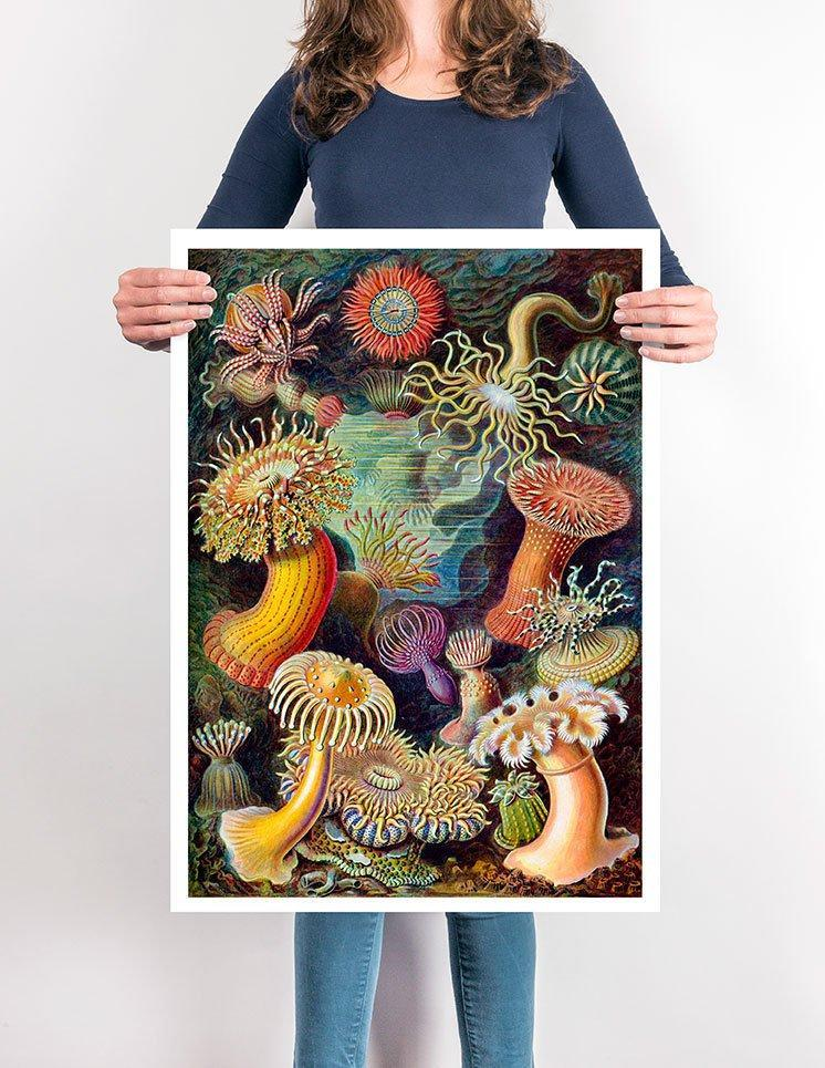 Coral Reef Forest Illustration by Ernst Haeckel Print On Canvas, Wall Hanging Decor PictureVintage FrogPictures & Prints