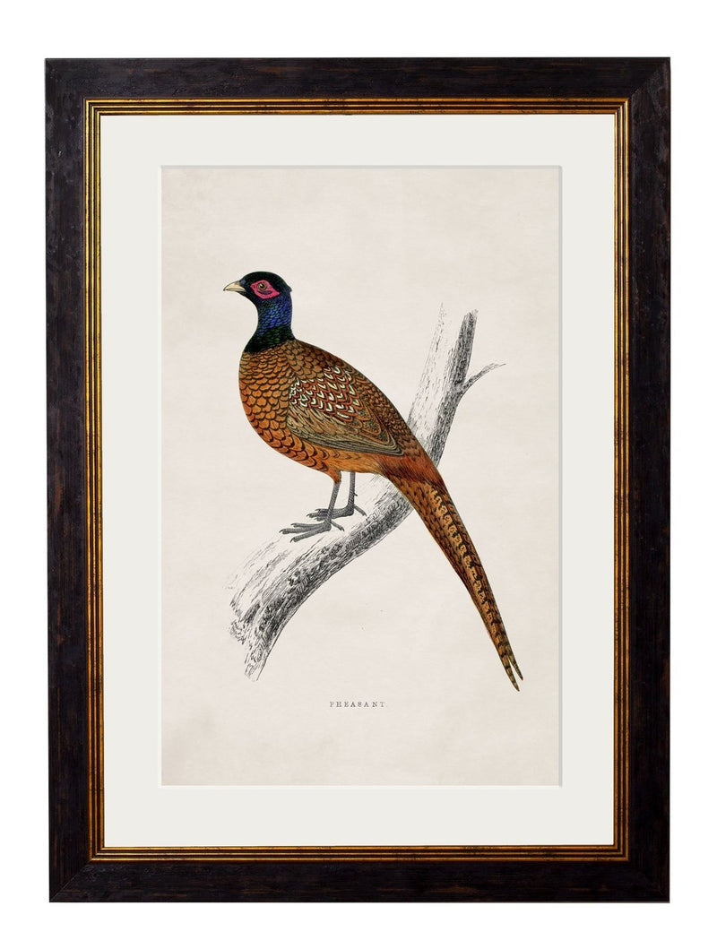 Framed 1850s Pheasant Print - Referenced From an 1800s British Natural History IllustrationVintage FrogPictures & Prints