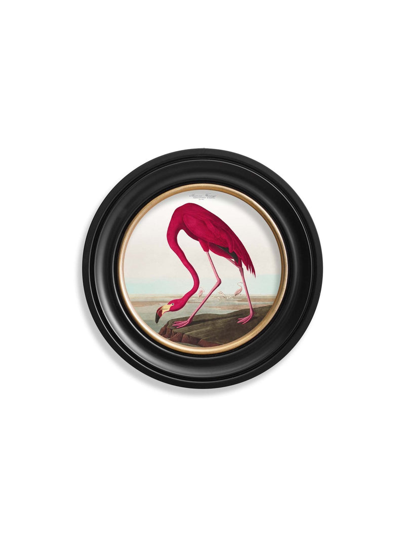 Framed American Flamingo Print - Referenced from an 1800s Hand-Coloured Audubon PrintVintage FrogPictures & Prints