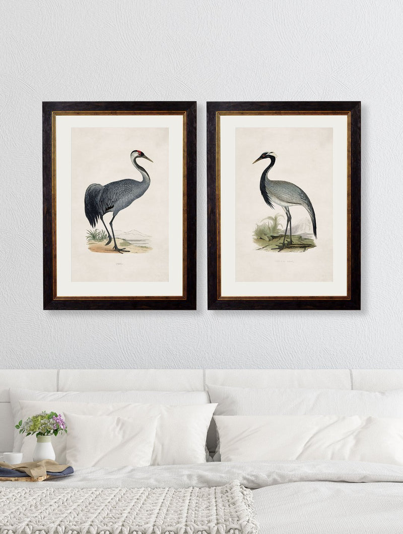 Framed British Crane Prints - Referenced from 1800s British Natural History Illustrations of Birds.Vintage FrogPictures & Prints