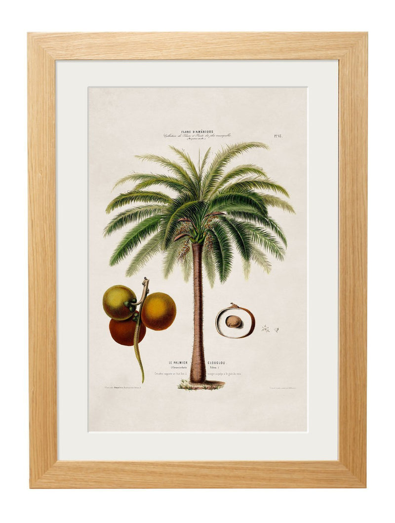 Framed British Studies of South American Palm Trees - Referenced From 1800s French Hand Coloured IllustrationsVintage FrogPictures & Prints