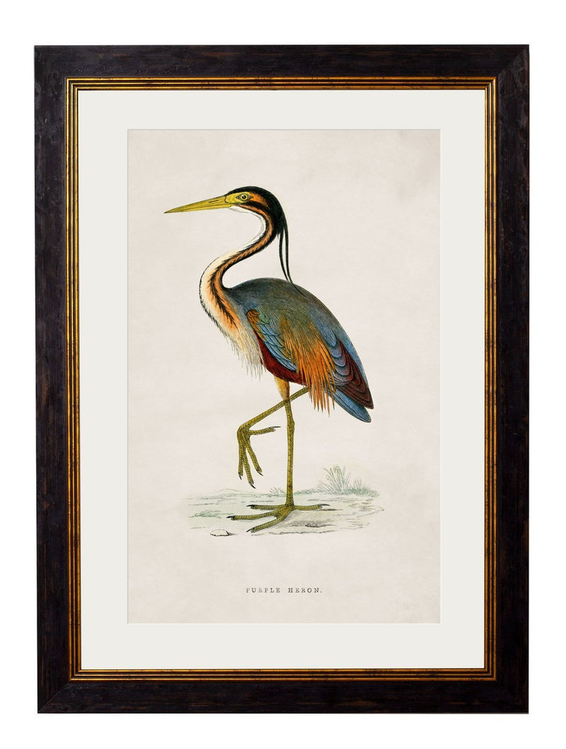 Framed British Wading Bird Prints - Referenced From 1800s British Natural History IllustrationsVintage FrogPictures & Prints