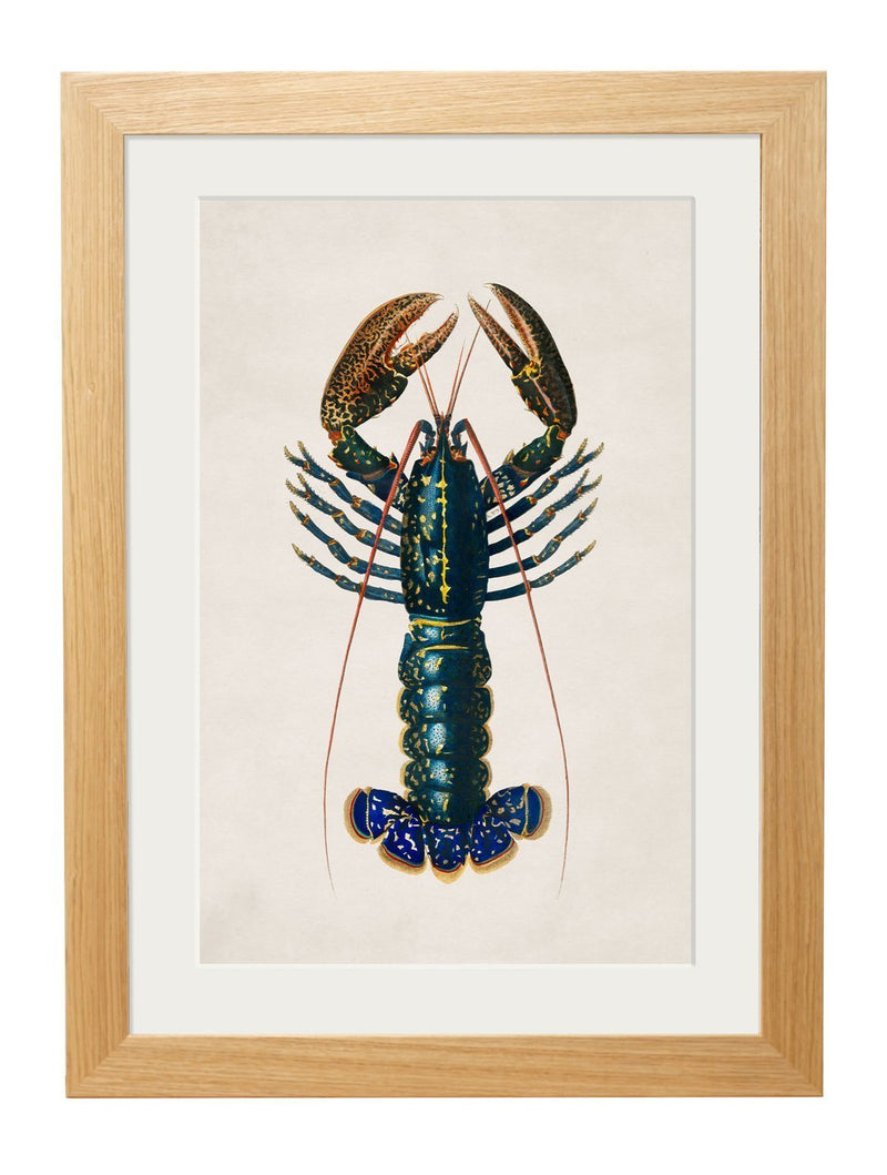 Framed Crimson Crawfish Print - Referenced from a French 1800s Hand-Coloured PrintVintage FrogPictures & Prints