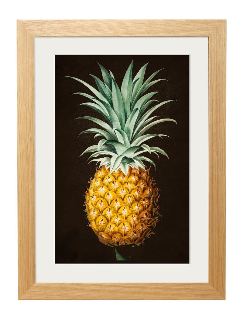 Framed Pineapple Study Print - Referenced from an 1800s Hand-Coloured PrintVintage FrogPictures & Prints
