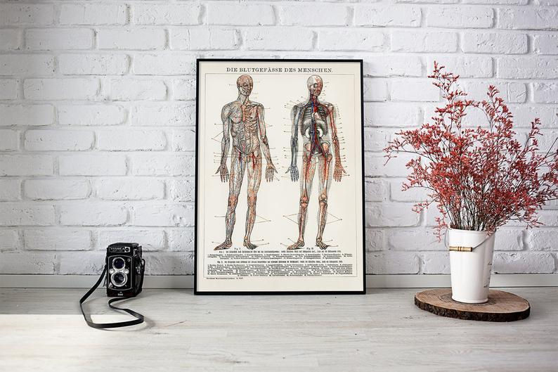 Human Body Blood Vessels Anatomy Poster Illustration Print On Canvas, Wall Hanging Decor PictureVintage FrogPictures & Prints