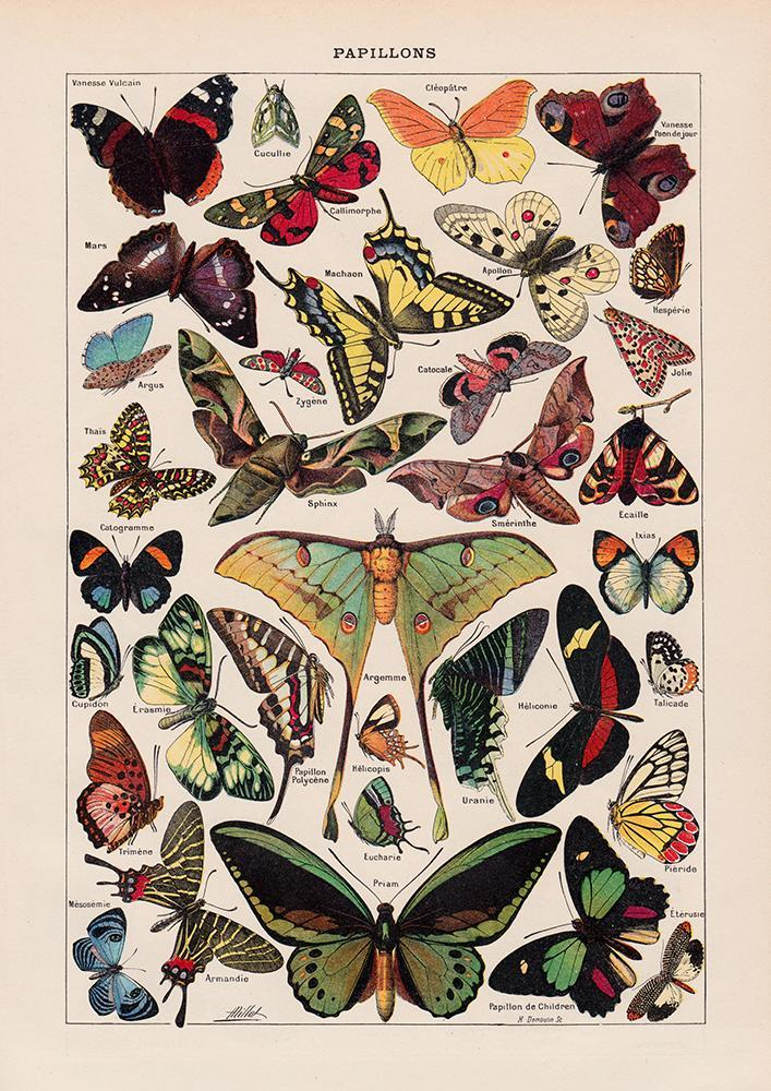 Papillons Chart Larousse, Butterfly Illustration Print On Canvas, Wall Hanging Decor Picture.Vintage FrogPictures & Prints
