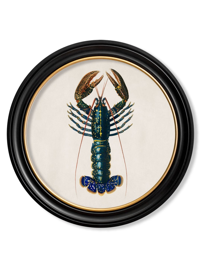 Round Framed Crimson Crawfish Print - Referenced from a French 1800s Hand-Coloured PrintVintage FrogPictures & Prints