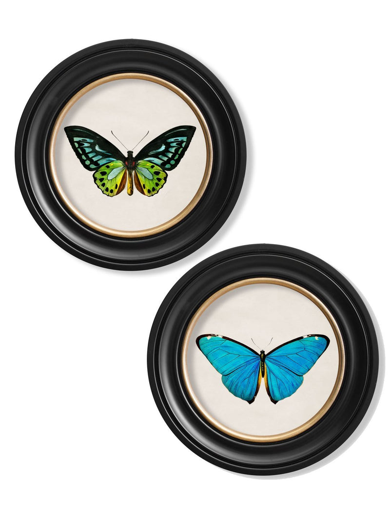 Round Framed Studies of Tropical Butterfly Prints - Referenced From The Work of an 1800s NaturalistVintage FrogPictures & Prints