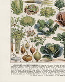 Vegetable Collection Chart Illustration Print On Canvas, Kitchen Wall Hanging Decor PictureVintage FrogPictures & Prints