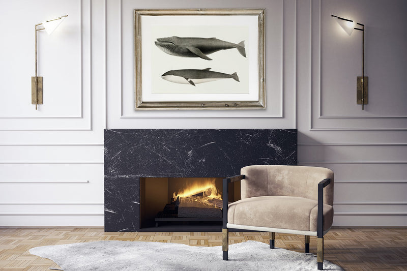 White Wale and Orca Killer Whale Illustration Print On Canvas, Wall Hanging Decor PictureVintage FrogPictures & Prints