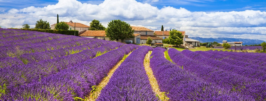 Love affair with Provence