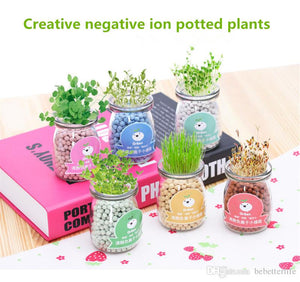 🔥Buy 3 Get 1 Free👉Creative DIY negative ions hydroponic potted self germination plants desktop radiation protection green plants small potted plants