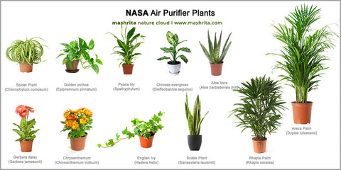 knya,plants,aloevera,pollution,control,dust,delhi