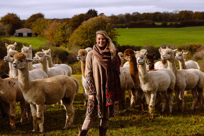 Alpacas and Shibumi! Our newest sustainable collection, made in Exmoor…