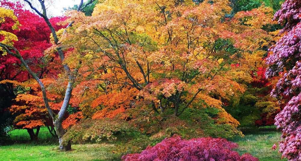 westonbirt-arboretum-places-to-visit-gloucestershire