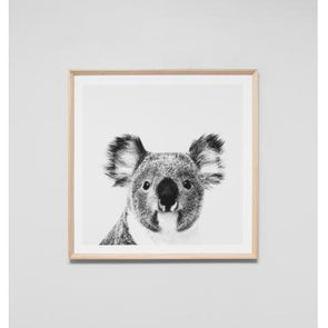 Koala Portrait Framed in Natural