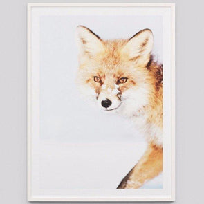 Snowy Fox framed in White