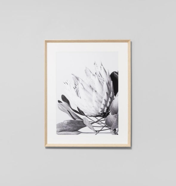 Protea Flower Grey