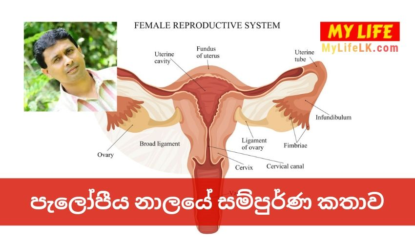 The Complete Story of Fallopian tube by Tissa Jananayake